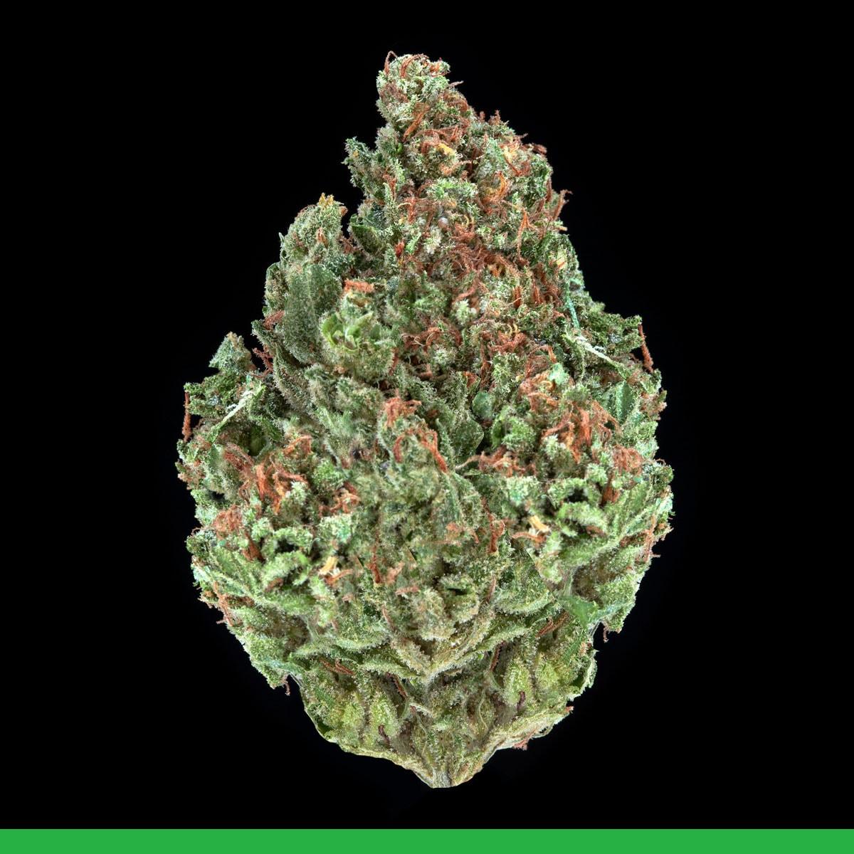 Kaya Weed Sativa Golden Back Gorilla