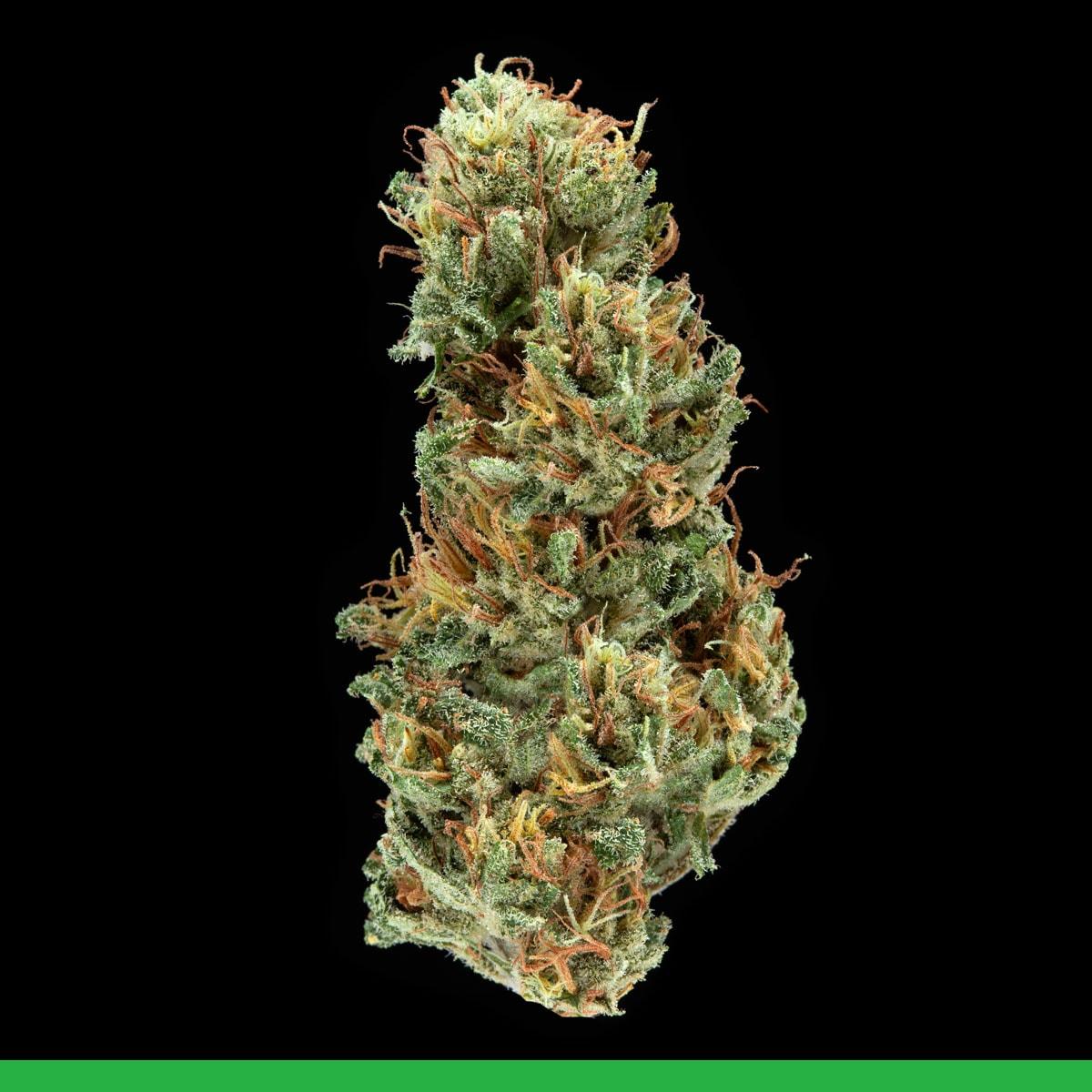 Kaya Weed Strain Sativa Full Joy