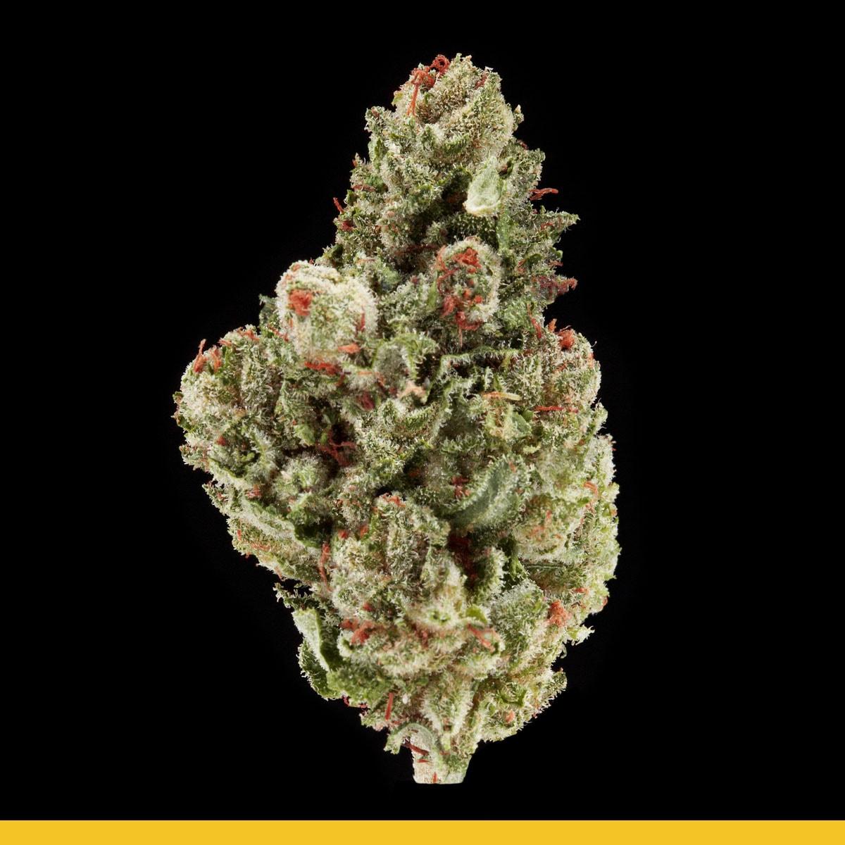Kaya Weed Strain Hybrid Tropical Frost
