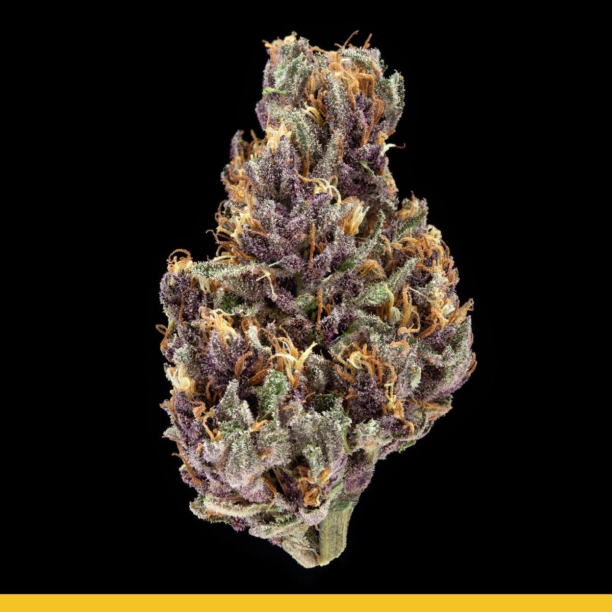 Kaya Weed Strain Hybrid Purple Chem D.O.G.