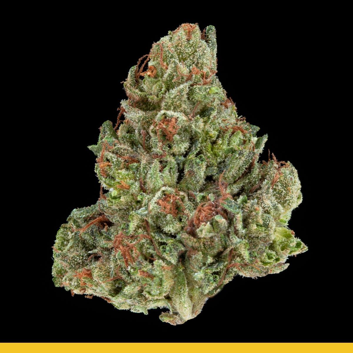 Kaya Weed Strain Hybrid Kurple